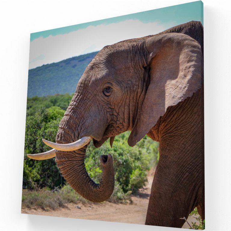 Elefante Canvas C Krea Canvas - Cuadros Decorativos Para Salas