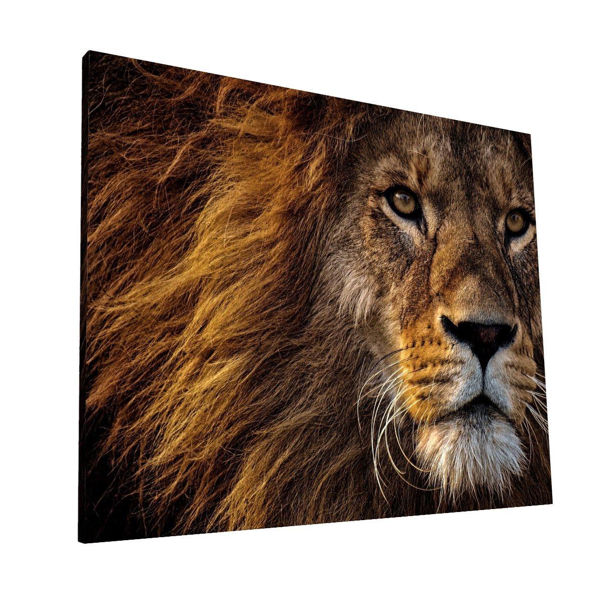 Mirada de León CANVAS H 1 Krea Canvas - Cuadros Decorativos Para Salas