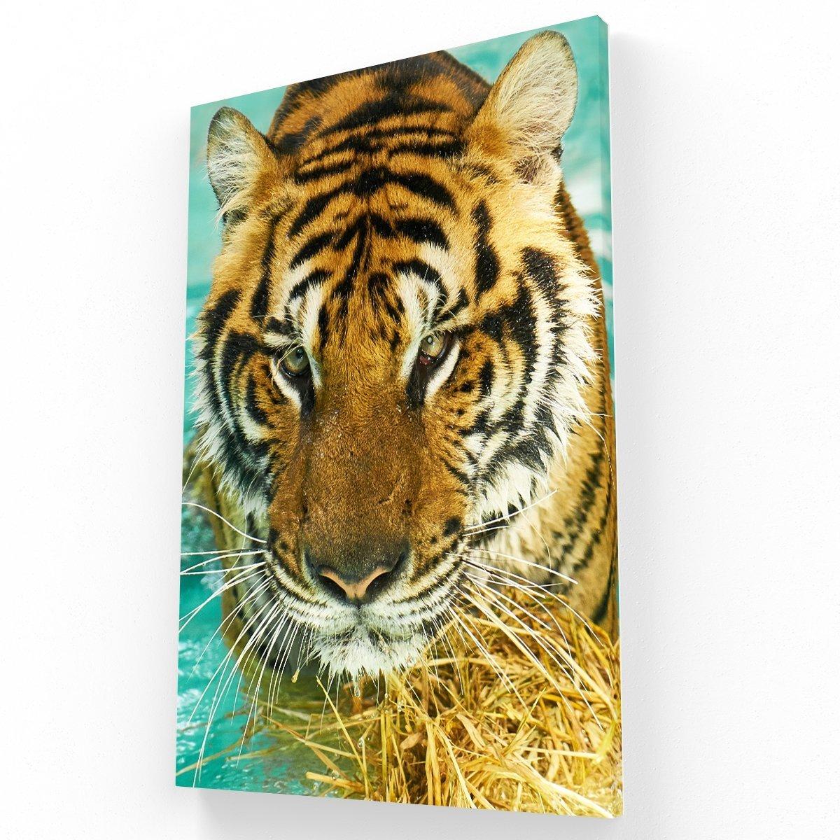 Mirada de Tigre Canvas V Krea Canvas - Cuadros Decorativos Para Salas