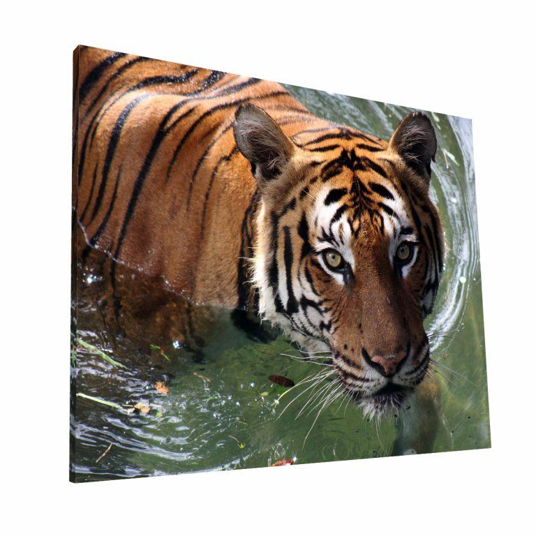 Nado del Tigre Canvas H Krea Canvas - Cuadros Decorativos Para Salas