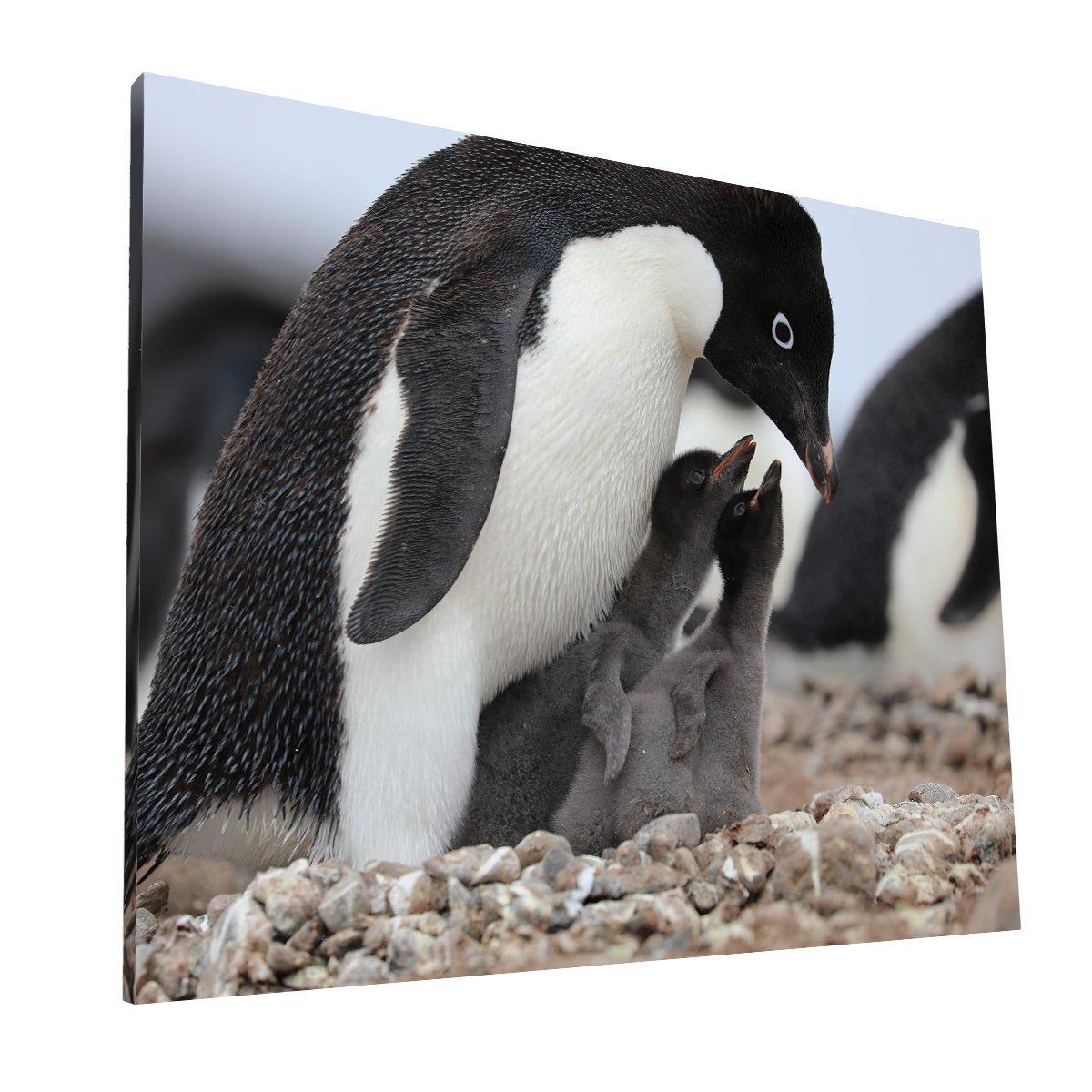 Pingüinos Canvas 1 Krea Canvas - Cuadros Decorativos Para Salas