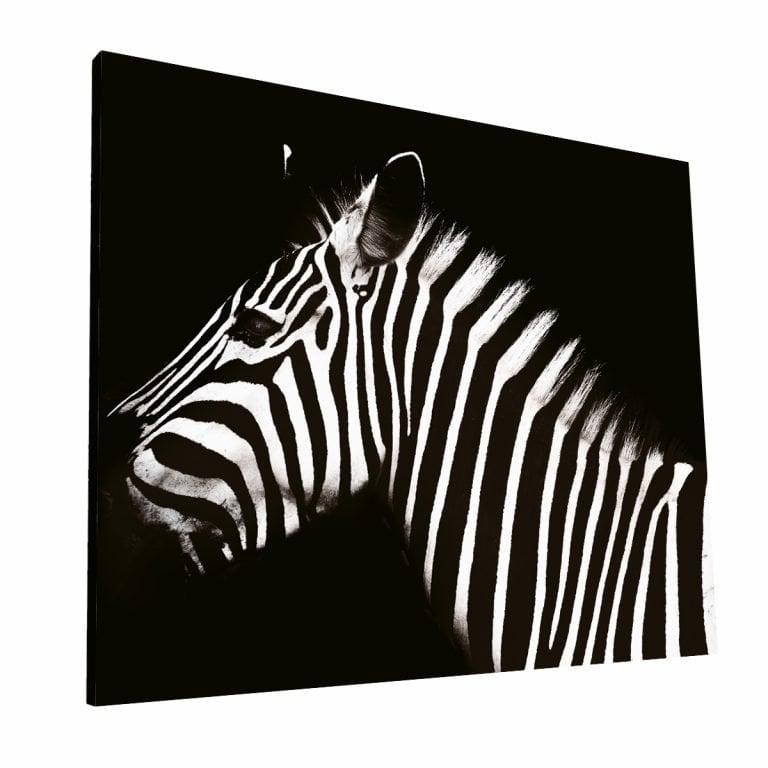Zebra 1 Krea Canvas - Cuadros Decorativos Para Salas