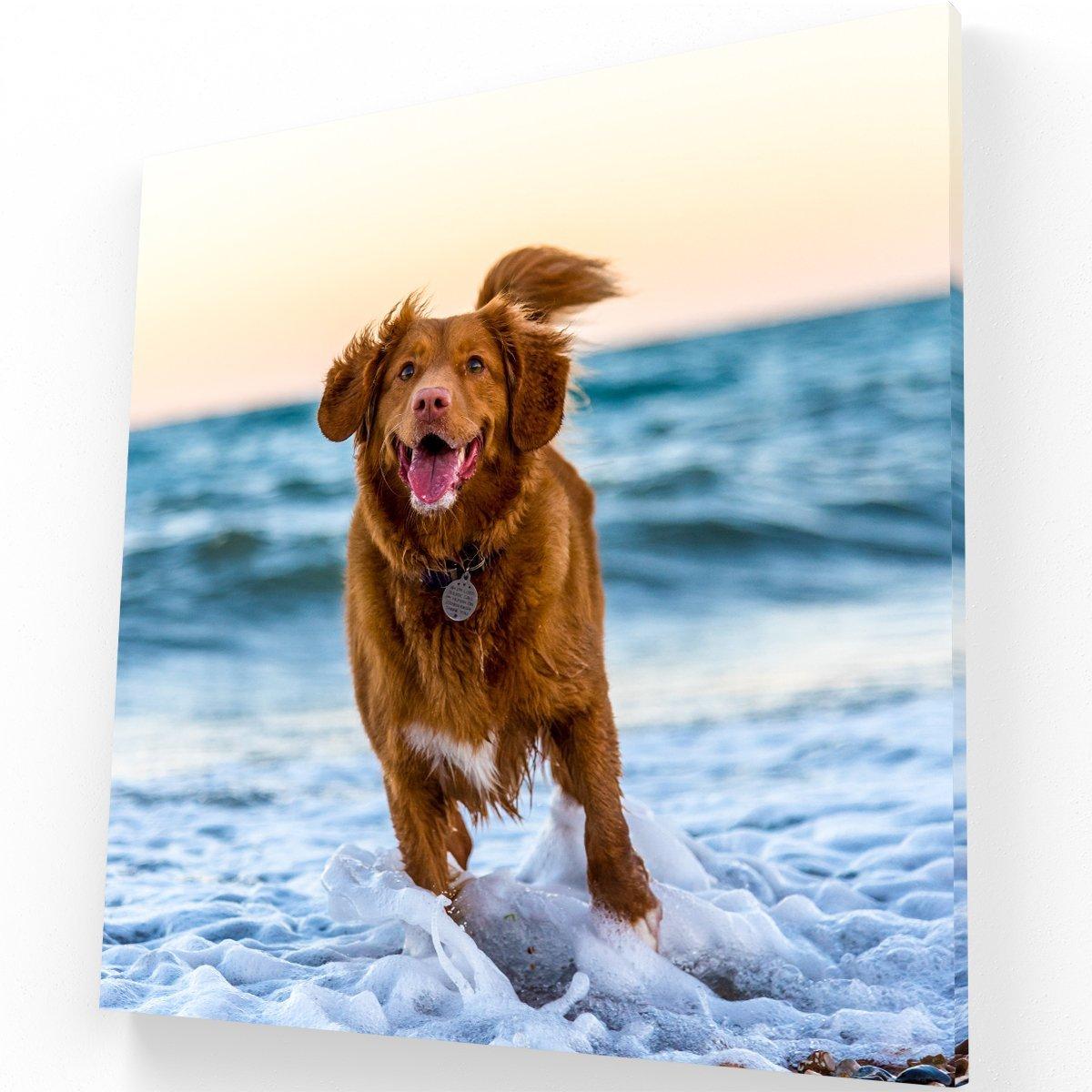 Joy of the dog Canvas C Krea Canvas - Cuadros Decorativos Para Salas