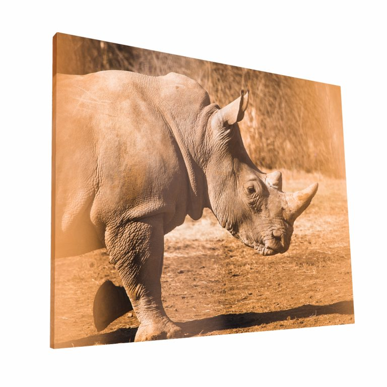 Rinoceronte Canvas H 1 Krea Canvas - Cuadros Decorativos Para Salas