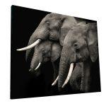 Cuadros de Elefantes