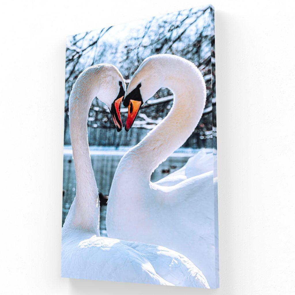 Cisne canvas Krea Canvas - Cuadros Decorativos Para Salas