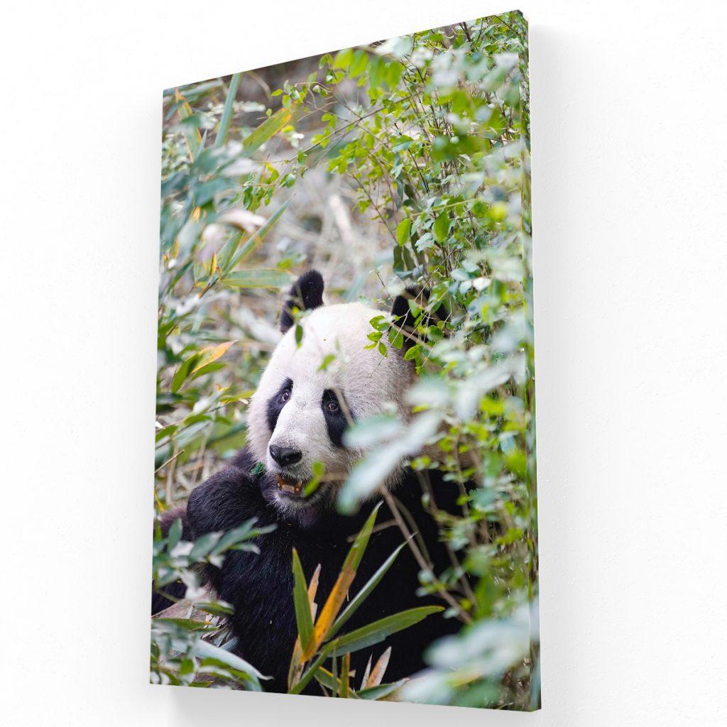 Panda Canvas Krea Canvas - Cuadros Decorativos Para Salas