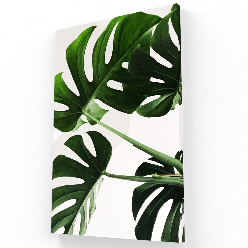 hojas canvas Krea Canvas - Cuadros Decorativos Para Salas