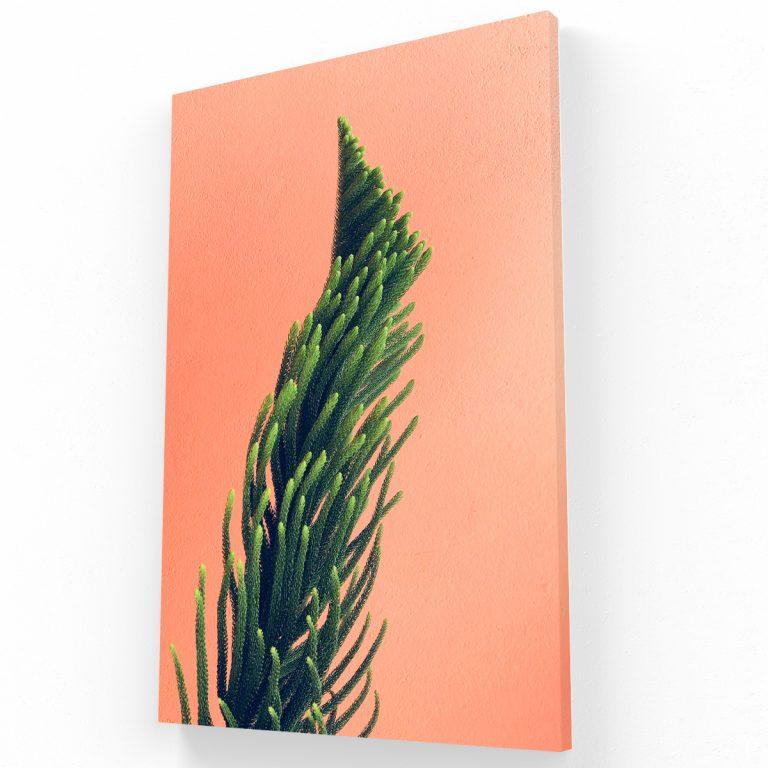Canvas Pachuca