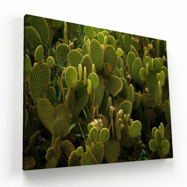 cactus canvas Krea Canvas - Cuadros Decorativos Para Salas