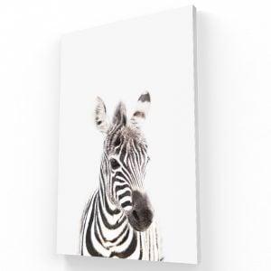 zebra canvas Krea Canvas - Cuadros Decorativos Para Salas